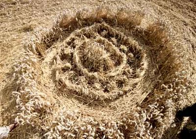 crop-circle-close-up-silbury-hill-near-avebury-wiltshire-reported-3rd-august-2009.jpg